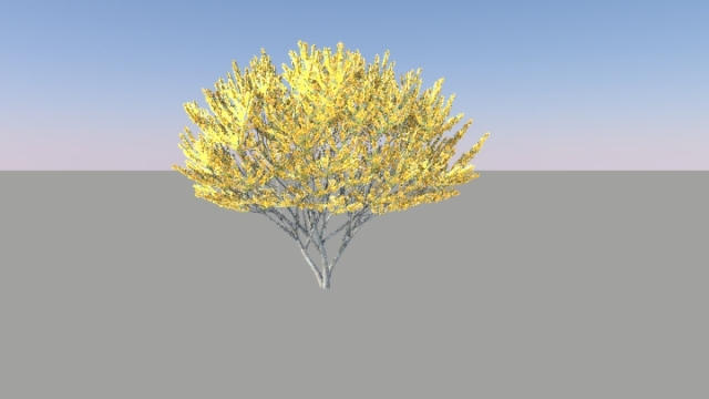 Rendered Tree
